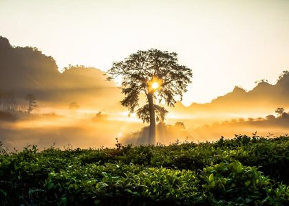 Thé ou Café… les deux au Vietnam !!